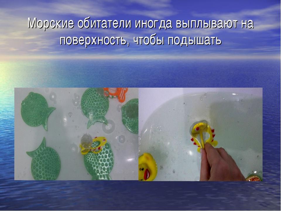 Морские обитатели иногда выплывают на поверхность, чтобы подышать