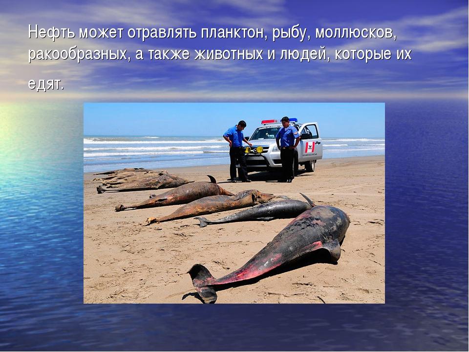 Нефть может отравлять планктон, рыбу, моллюсков, ракообразных, а также живот...