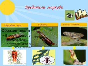 Вредители моркови Морковнаямуха Уховертка Пенницаслюнявая
