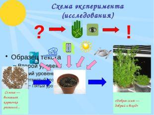Схема эксперимента (исследования) ? ! «Доброе семя — добрый ивсход» Семена —