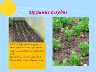 Дружные всходы! 1- Нельзя выращивать морковь на одном и том же месте. Это ну