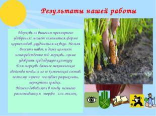Результаты нашей работы Морковь не выносит чрезмерного удобрения: может измен