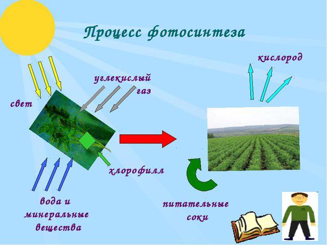 Процесс фотосинтеза углекислый газ свет вода и минеральные вещества кислород...