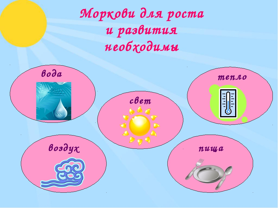 Моркови для роста и развития необходимы вода свет тепло воздух пища
