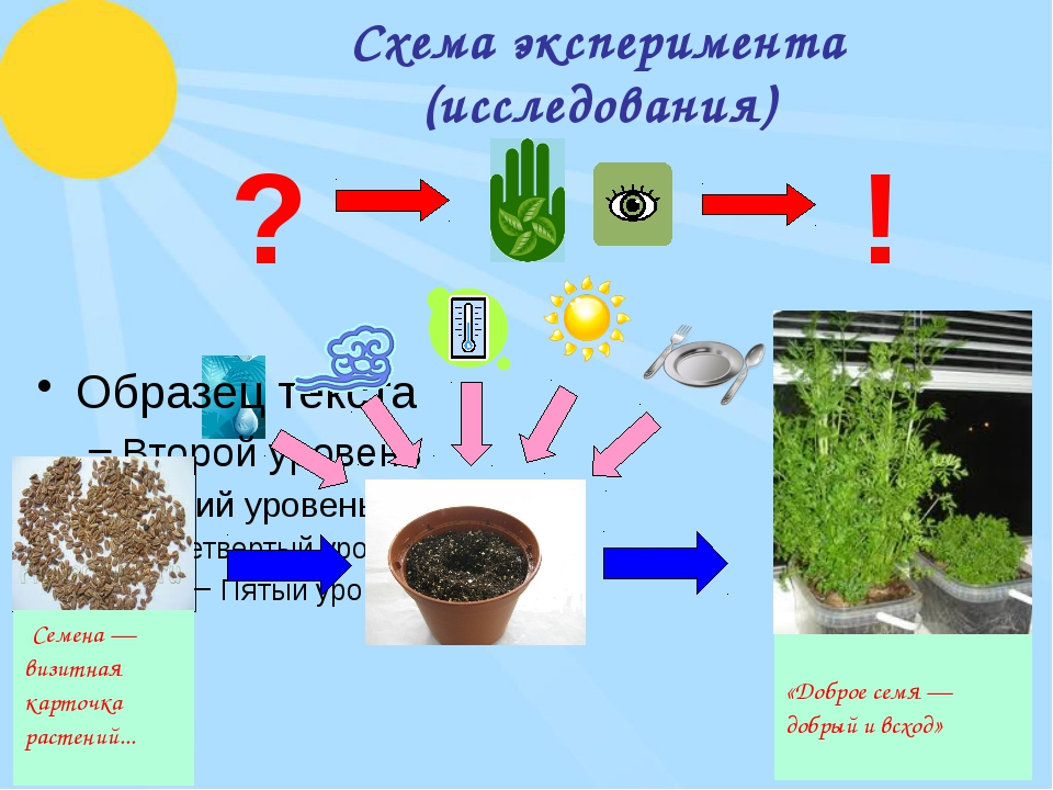 Схема эксперимента (исследования) ? ! «Доброе семя — добрый ивсход» Семена —...