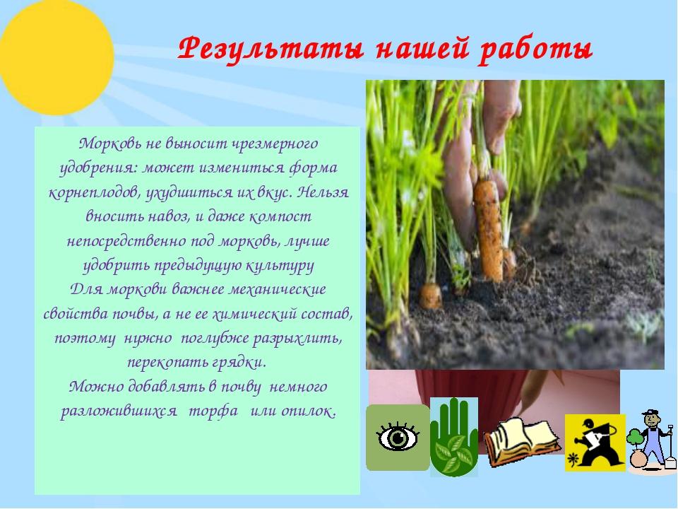 Результаты нашей работы Морковь не выносит чрезмерного удобрения: может измен...