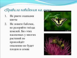 «Правила поведения на лугу» 1. Не рвите охапками цветы 2. Не ловите бабочек,