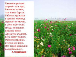 Разными цветами зацветёт нашлуг, Рядом на поляне, там живёт барсук. Бабочки