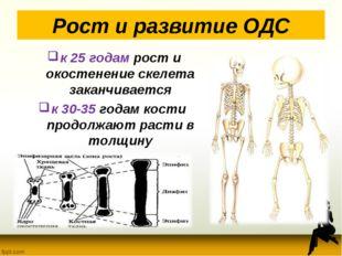 Рост и развитие ОДС к 25 годам рост и окостенение скелета заканчивается к 30-