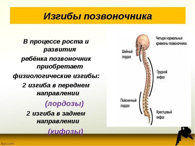 Изгибы позвоночника В процессе роста и развития ребёнка позвоночник приобрета...