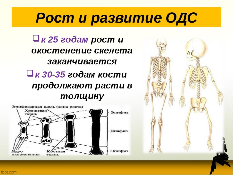 Рост и развитие ОДС к 25 годам рост и окостенение скелета заканчивается к 30-...