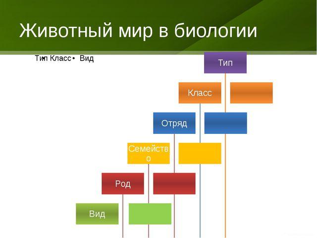 Животный мир в биологии