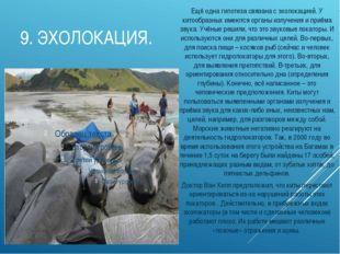 9.ЭХОЛОКАЦИЯ. Ещё одна гипотеза связана с эхолокацией. У китообразных имеютс