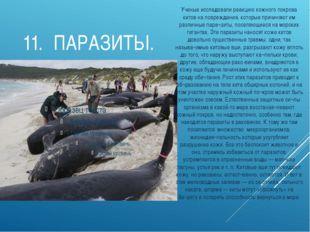 11.ПАРАЗИТЫ. Ученые исследовали реакцию кожного покрова китов на повреждения