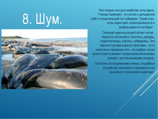 8. Шум. Эта теория сегодня наиболее популярна. Ученые заявляют, что китов и д...