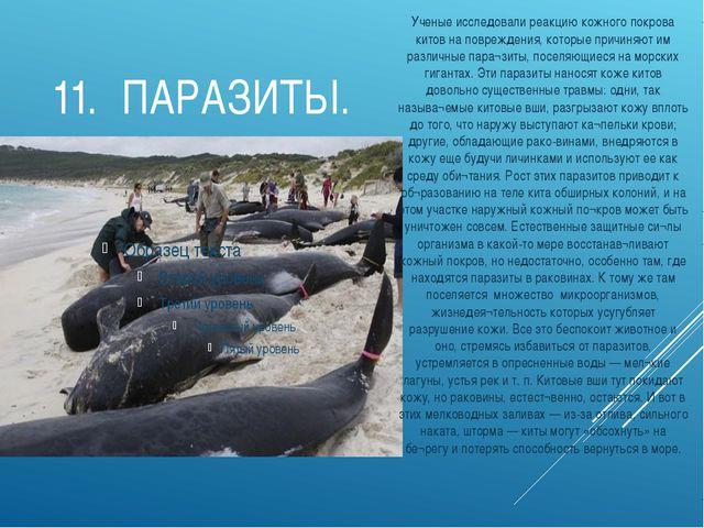 11.ПАРАЗИТЫ. Ученые исследовали реакцию кожного покрова китов на повреждения...