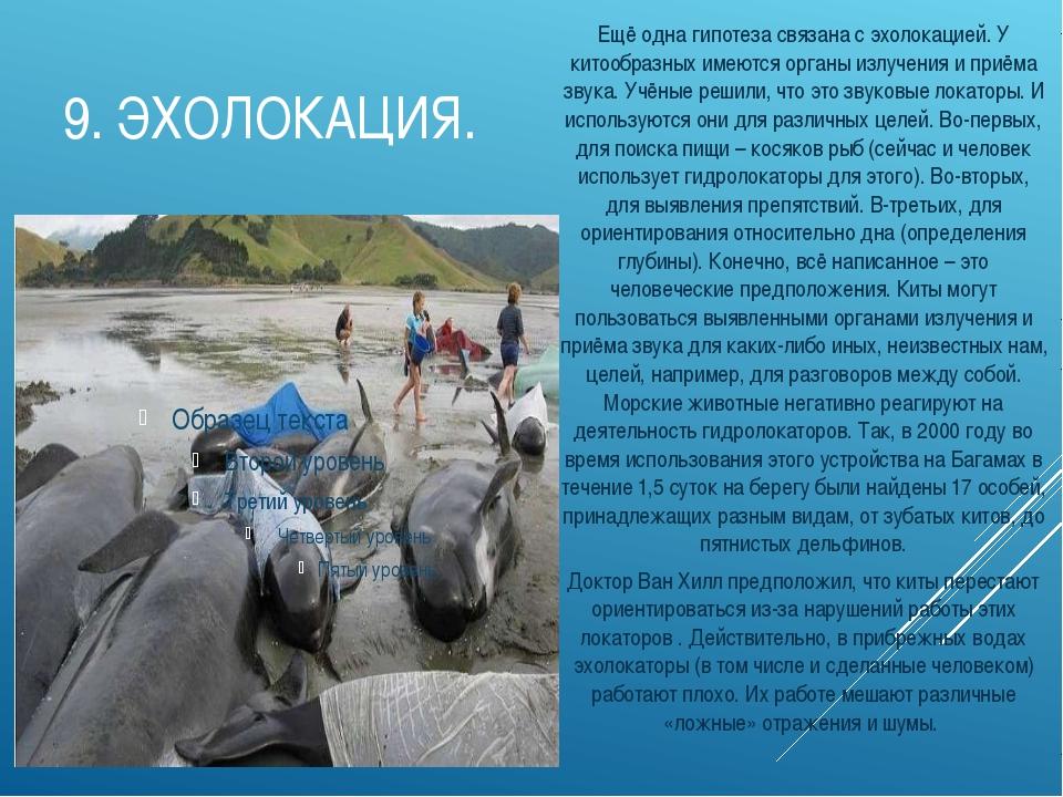 9.ЭХОЛОКАЦИЯ. Ещё одна гипотеза связана с эхолокацией. У китообразных имеютс...