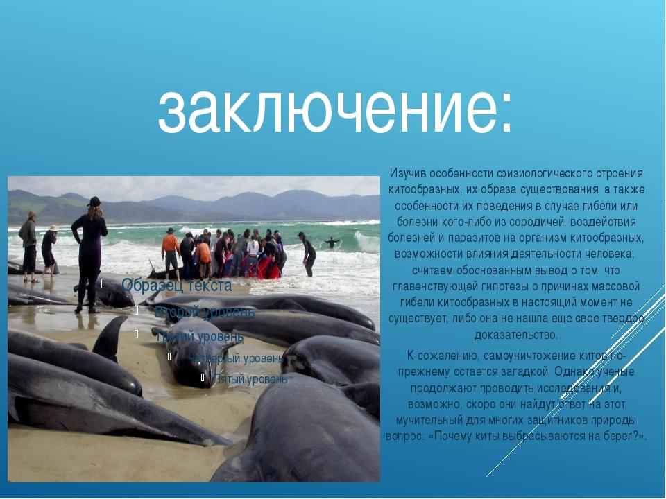 заключение: Изучив особенности физиологического строения китообразных, их обр...