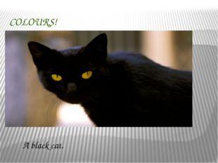 COLOURS! A black cat.