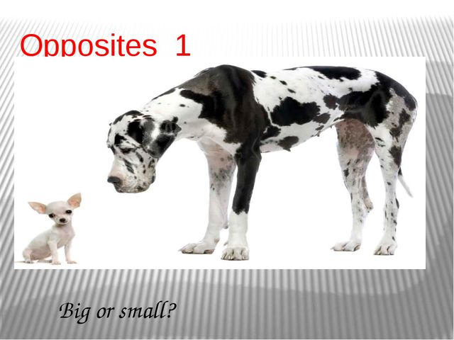 Opposites 1 Big or small?