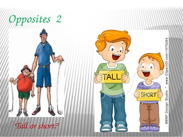 Opposites 2 Tall or short?