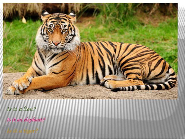 Is it a lion? Is it an elephant? Is it a tiger?