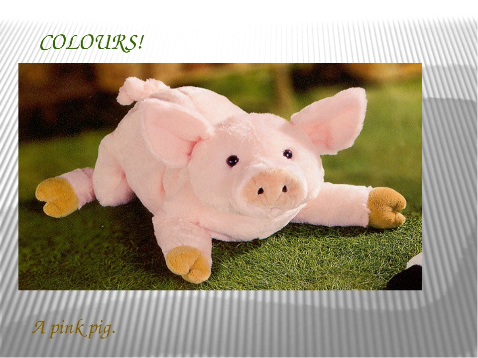 COLOURS! A pink pig.