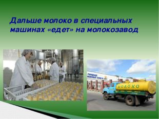 Дальше молоко в специальных машинах «едет» на молокозавод