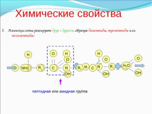 Химические свойства 5. Аминокислоты реагируют друг с другом, образуя дипептид