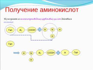 Получение аминокислот Их получают из галогенопроизводных карбоновых кислот д