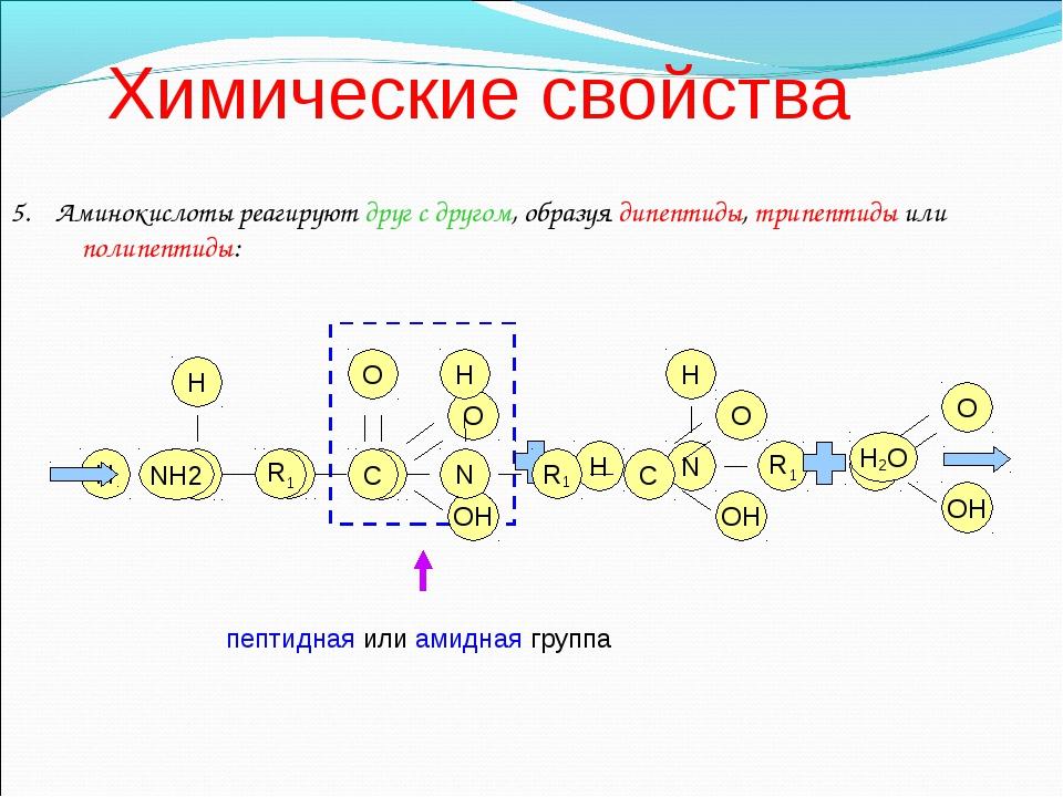 Химические свойства 5. Аминокислоты реагируют друг с другом, образуя дипептид...