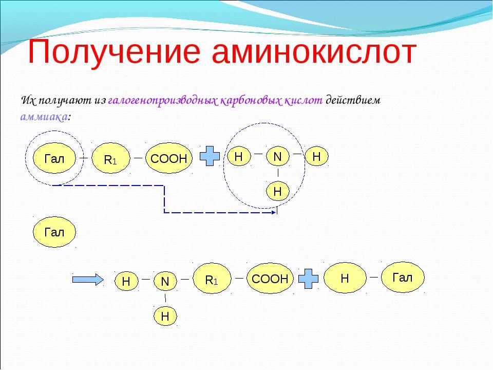 Получение аминокислот Их получают из галогенопроизводных карбоновых кислот д...