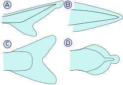 http://upload.wikimedia.org/wikipedia/commons/thumb/8/88/PletwyRyb.svg/250px-PletwyRyb.svg.png