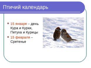 Птичий календарь 15 января – день Кура и Курки, Петуха и Курицы 15 февраля –
