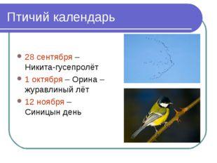 Птичий календарь 28 сентября – Никита-гусепролёт 1 октября – Орина – журавлин