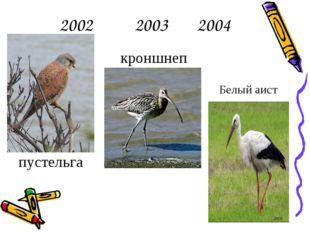 2002 2003 2004 пустельга кроншнеп Белый аист