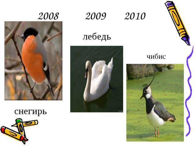 2008 2009 2010 снегирь лебедь чибис