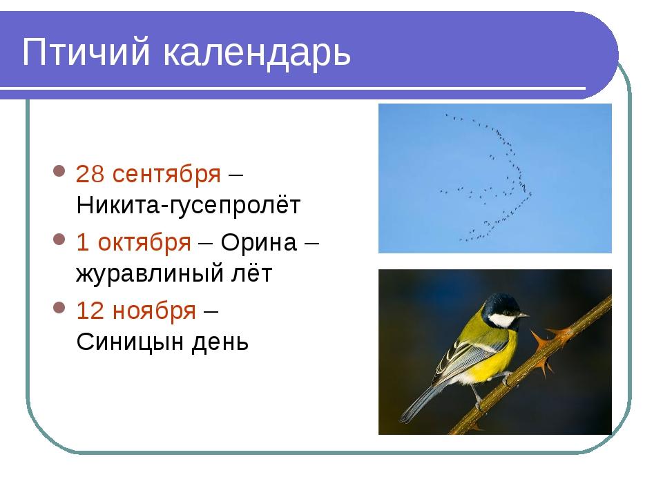 Птичий календарь 28 сентября – Никита-гусепролёт 1 октября – Орина – журавлин...