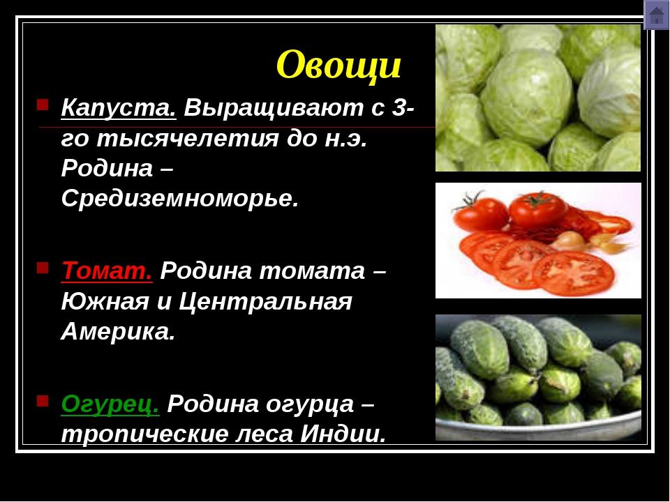 Овощи Капуста. Выращивают с 3-го тысячелетия до н.э. Родина – Средиземноморье...