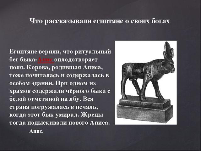 Египтяне верили, что ритуальный бег быка-Апис оплодотворяет поля. Корова, род...