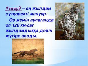 Гепард – ең жылдам сүтқоректі жануар. Өз жемін аулағанда ол 120 км/сағ жылдам