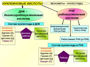 НУКЛЕИНОВЫЕ КИСЛОТЫ МОНОМЕРЫ - НУКЛЕОТИДЫ ДНК – дезоксирибонуклеиновая кислот