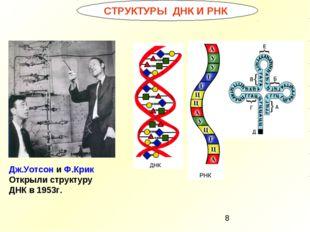 СТРУКТУРЫ ДНК И РНК Дж.Уотсон и Ф.Крик Открыли структуру ДНК в 1953г.