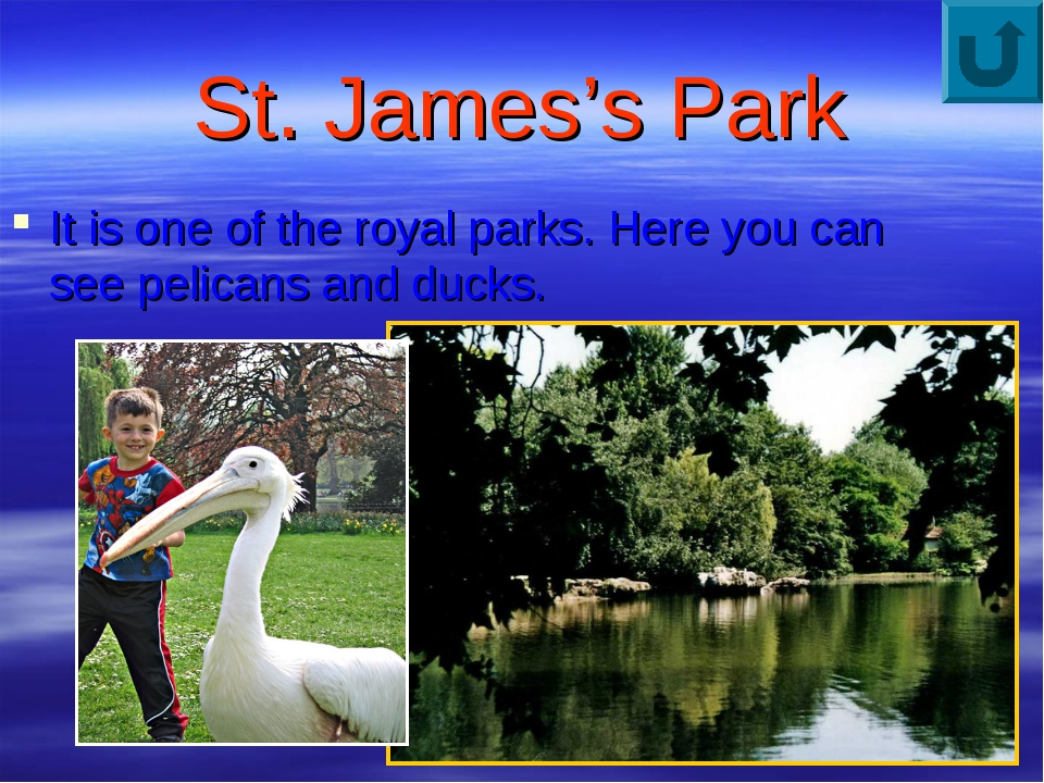 St. James's Park It is one of the royal parks. Here you can see pelicans and...