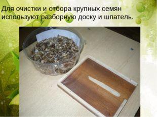 Для очистки и отбора крупных семян используют разборную доску и шпатель.