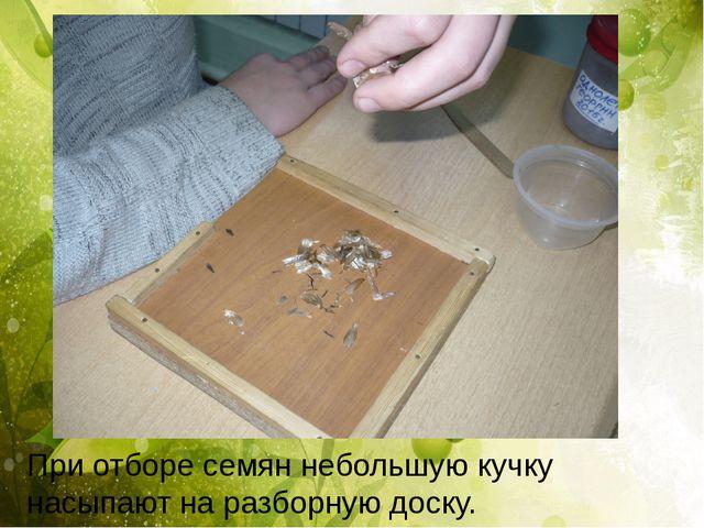 При отборе семян небольшую кучку насыпают на разборную доску.