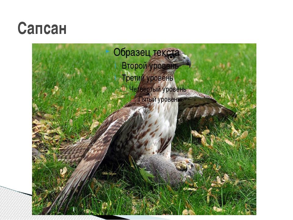 Сапсан