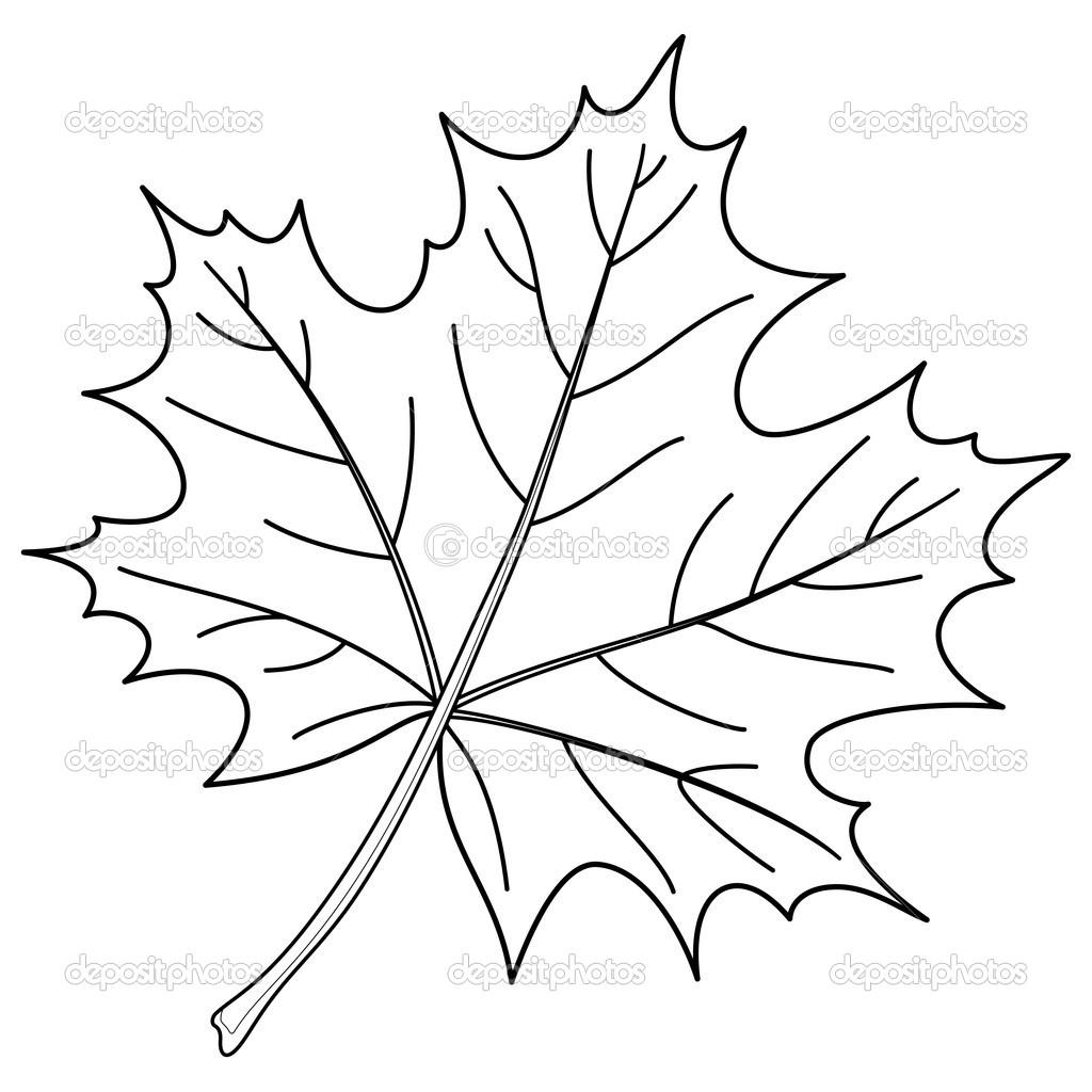 C:\Users\admin\Desktop\depositphotos_6334946-Leaf-of-a-maple-contour.jpg
