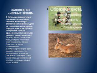ЗАПОВЕДНИК «ЧЕРНЫЕ ЗЕМЛИ» В Калмыкии стремительно сокращается популяция сайга