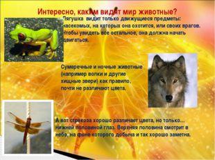 Интересно, каким видят мир животные? Лягушка видит только движущиеся предметы